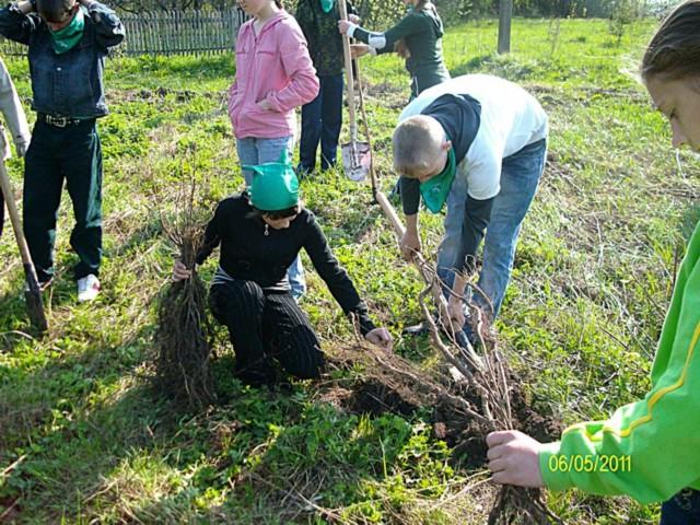 Сажаем деревья около дома 858